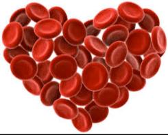 Visita ao IPST (Instituto do Sangue)